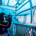 オーストラリアのホホジロザメ(撮影:越智 隆治)