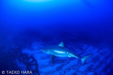 2mの漁礁に比べると、その巨大さが良くわかる