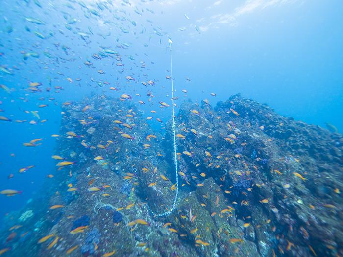 【伊東】 伊豆屈指のダイナミックな地形と魚群を満喫しよう