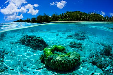 ウエットスーツを着るのがもったいない! と思えるほどの気持ち良さでした。波間にサヨリを形よく入れながら、その水の感触を撮りたいと思いました。マリアナの透明度を感じてもらえたらうれしいです。見ていると水に入りたくなるところが気に入っています。(撮影ポイント=オブジャンビーチ/Obyan Beach)