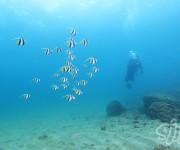 次の記事: 【白崎】海藻の森、季節来遊魚など、季節感あふれる海を楽しめる