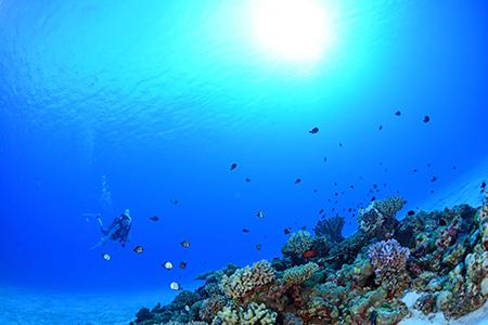 静かでまったりと潜れるテニアンの海を象徴するような場所。真っ白な砂地にサンゴの根が点在する癒し系のポイントです。(撮影ポイント=ウラシマ/Urashima)