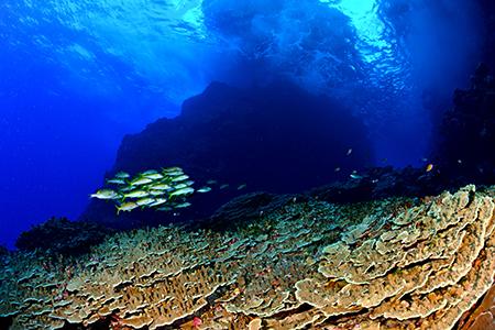 ダイナミックな地形にサンゴ、そして抜群の透明度。テニアンの魅力がギュッと凝縮されたようなシーンで、お気に入りの一枚です。(撮影ポイント=ガマ/Gama)