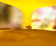 前の記事: 天使の赤ちゃんダンゴウオが1ダイブで20個体!?  ダンゴウ