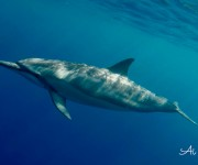 前の記事: 約100頭のスピナードルフィンと遭遇して大興奮! イルカと一