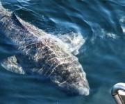 前の記事: 世界で最年長の脊椎動物