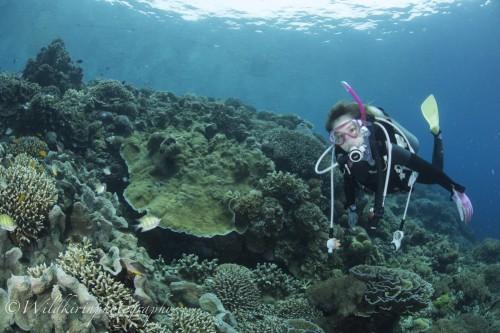 14_9_2017 Balicasag Underwater Comolete_110