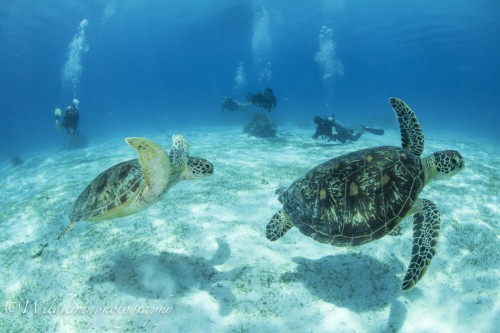 16_9_2017 Balicasag Underwater Complete_47