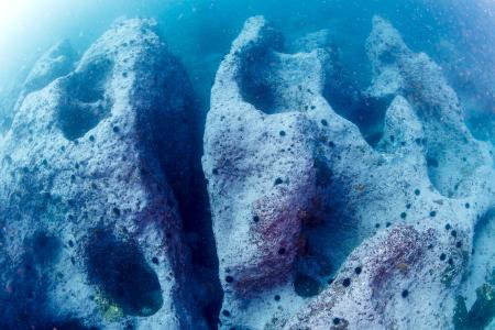 いくつものポットホールが作り出した摩訶不思議な海底地形。じっと見ていると、なんだか生き物の顔にも見えてきた