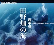 前の記事: こんな海中景観、見たことも聞いたこともない! 岩手県・田野畑