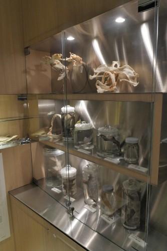 水族館顔負けの骨格標本。