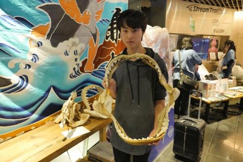 サメの特徴的な歯までしっかり再現されて作られた骨格標本。