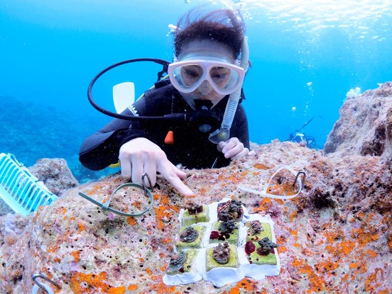 【募集】オリンパスがサンゴの植え付けを行うボランティアダイバーを募集 〜最新カメラで水中撮影会も〜