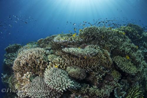 16_9_2017 Balicasag Underwater Complete_13