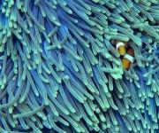 次の記事: サンゴ礁への脅威