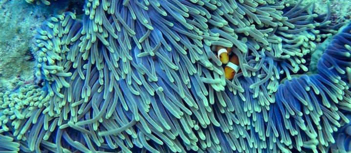 サンゴ礁への脅威