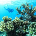 great_coral_20130912_4-500x333