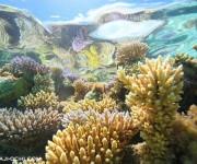 前の記事: 【告知】2018年4月22日(日)、親子でサンゴを学ぼう!