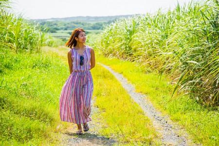 サトウキビ畑の小道をお散歩するのも気持ちいい