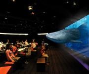"""次の記事: 沖縄""""美ら海""""を3Dや4K映像で! 迫力の水中映像を楽しもう"""