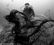 次の記事: 石垣島の海中にディメンター現る! コブシメの産卵地でまさかの