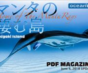 前の記事: 石垣島のウェブマガジン「マンタの棲む島〜Home of Th