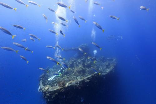 特設航空機運搬艦「富士川丸」という船の船首(ミクロネシア・チューク)