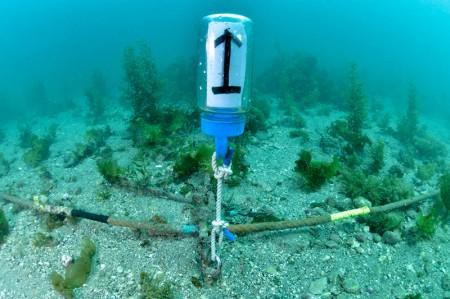 水中にはガイドロープが張られ、数字のついたブイも設置。ロープに貼られた色のついたテープで方向がわかる