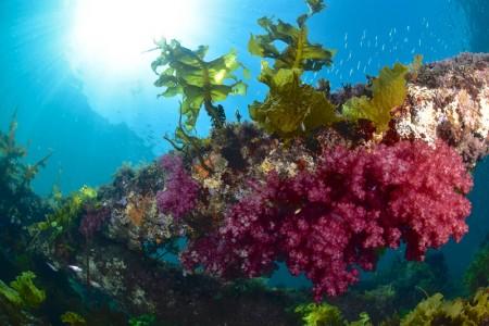 鉄骨にはソフトコーラルや海藻が付着。水深が浅いので、光を入れたフォトジェニックなシーンが見られる