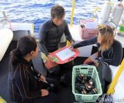 前の記事: 漂流時にダイバーが取るべき行動と生死を分けるポイント