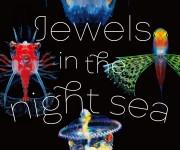 次の記事: 写真家、峯水 亮さんによる写真展「Jewels in the