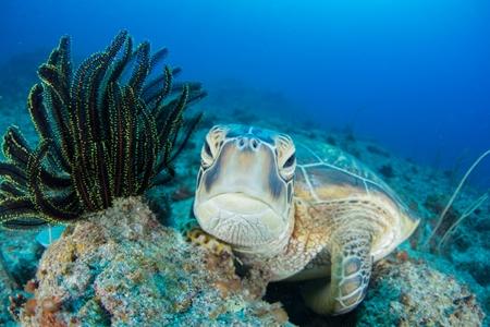どこに行っても人気生物の上位にランクインするウミガメは、見ているだけで癒されること間違いなし