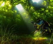 次の記事: 水中ワイド写真で感じる鹿児島・錦江湾の海中の四季〜SBオーナ