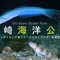 shirasaki2018_325_226