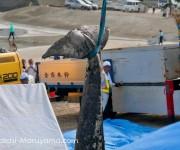 前の記事: 由比ガ浜に漂着したシロナガスクジラ〜解体の様子と越智カメラマ