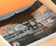 次の記事: 水口博也スライドショーin東京「クジラの海への旅」2019年