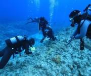 次の記事: 【募集】ダイバーによるサンゴの健康調査「リーフチェック」 が