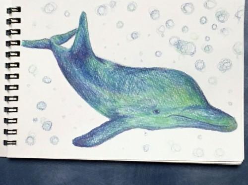 バハマのイルカのイラスト(撮影:越智 隆治)