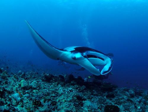 環礁によって、いろんな色のダイビングを楽しめる
