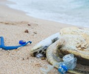次の記事: 海洋プラスチックごみとウミガメ