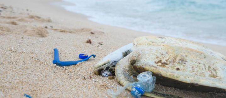 海洋プラスチックごみとウミガメ