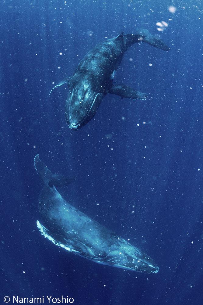 症 クジラ 恐怖
