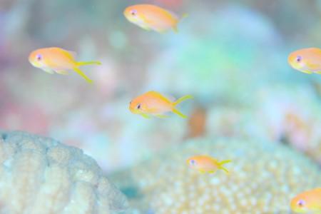 ガイド勢は海に精通しており、生物もしっかり見せてくれる