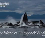 次の記事: 【プレゼントあり!】水口博也さんプロデュース!ザトウクジラを