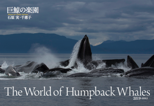 The World of Humpback Whales