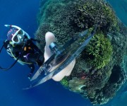 次の記事: 動画でトライ!パプアニューギニアの肝の座ったチンアナゴに36
