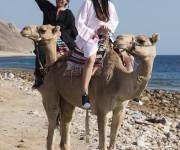 前の記事: キャメルダイブって何だ!?エジプトの海も遺跡も丸ごと楽しむレ