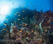 前の記事: レッドシー(紅海)ダイビングの魅力〜色とりどりの魚群にドロッ