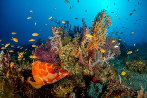 伊豆大島に来たらぜひ潜りたい「秋の浜」。美しいブルーの海景は必見(撮影/堀口和重)