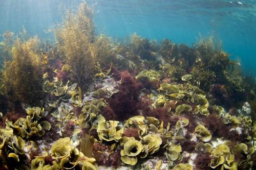春の海を感じさせる海藻の群生。撮影地:須崎(撮影/堀口和重)